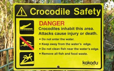 Crocodile Spotting in Kakadu National Park
