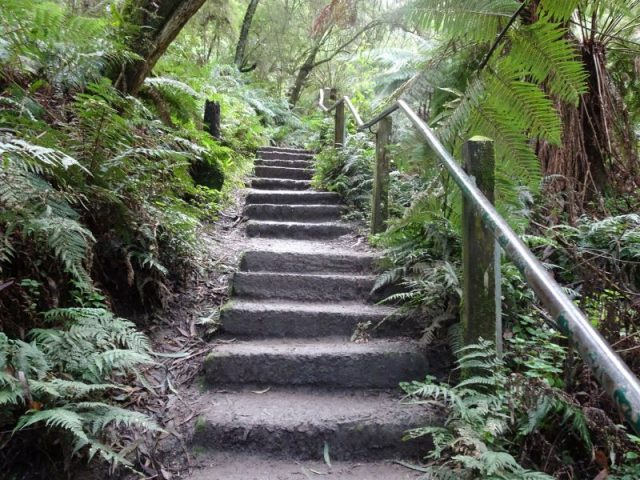 1000 Steps In The Dandenong Ranges. 1000 Steps Made Of Dirt, Concrete And Timber. Some Steep With A Hand Railing And Ferns And Other Rainforest Greenery On Either Side Of The Track.