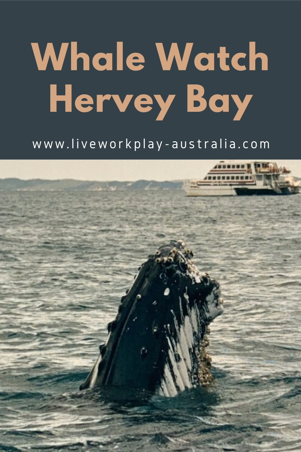 Whale in Hervey Bay Pinterest Pin