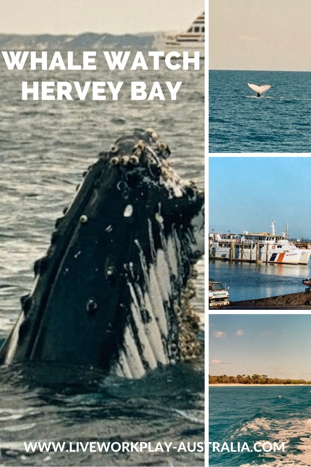 Whale Watching Harvey Bay Pinterest Pin