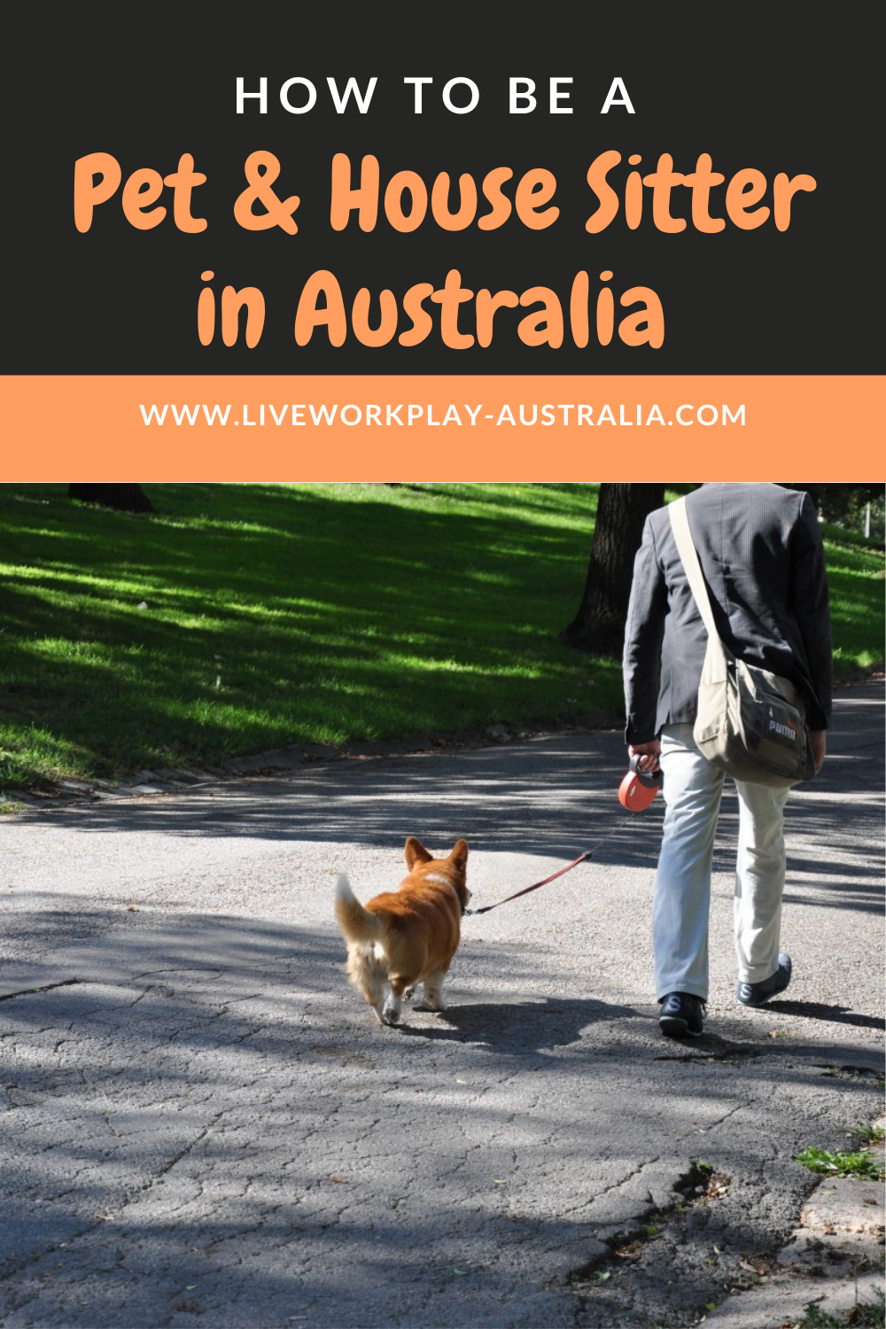 Walking A Dog When You House And Pet Sit In Australia
