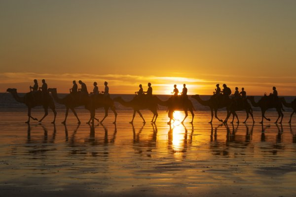 Camels With People Riding Them Along Cable Beach, Broome, Australia at Sunset.