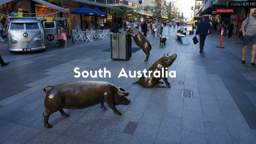 Three Bronze Pigs In Rundle Mall, Adelaide. One Looking In A Bin. One Sitting and One Standing.